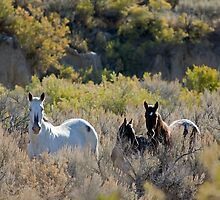 The Lame Grey Mare...  by A.M. Ruttle