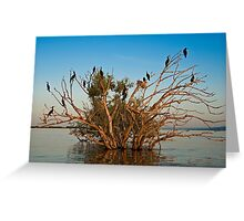 Cormorants' gathering at sunset Greeting Card