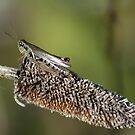 Grasshopper by Dave & Trena Puckett