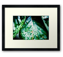 Natures Sweat Framed Print