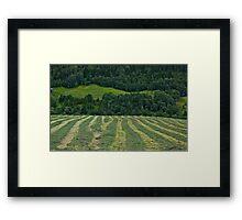 Memorable green & green moments . Norway.Brown Sugar. Framed Print