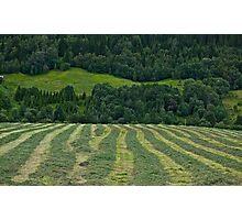 Memorable green & green moments . Norway.Brown Sugar. Photographic Print