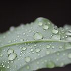 Rain Drops by bbarnard