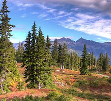 Mt. Baker Wilderness Area by Barb White