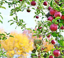 Apples by Lyana Lynn