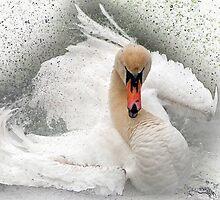 Attitude in white by Darren Bailey LRPS