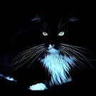 Whiskers in the dark by Alan Mattison