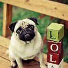Lola Pug: Calendar Girl by Katie Weychardt