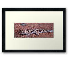Gecko Beauty Framed Print