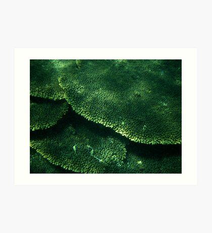 Layers of Coral, Coral Bay, WA Art Print