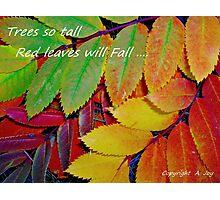 Fall Greetings Photographic Print