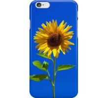 Sunflower, iphone case iPhone Case/Skin