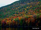 Fall Foliage by Marcia Rubin