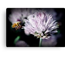 The Life Of a Bee Canvas Print