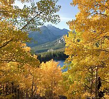Aspens and Longs Peak, Rocky Mountain National Park, Colorado by Teresa Smith