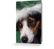 Mojo's New Holiday Coat - Digital Photography Greeting Card