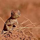 Posing Lizard 2 by Denny0976