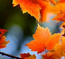 Huron Leaves by Marcella Hadden