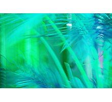 A Tropical Dream Photographic Print