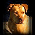 Red Dog by AngieBanta