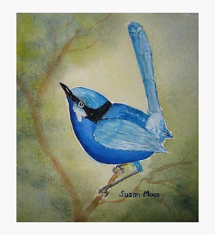 Blue Boy Photographic Print