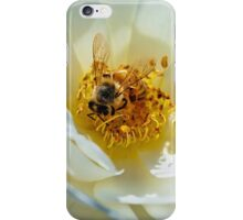Bee on a white rose iPhone Case/Skin