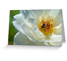 Bee on a white rose Greeting Card