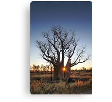 Sunset Behind a Boab Tree Canvas Print