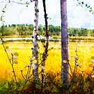 Marsh scene by natans