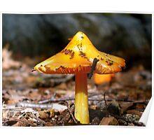 Orange Mushroom Poster