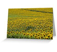 Sea Of Sunshine Greeting Card