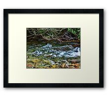 Nature's Bar Framed Print