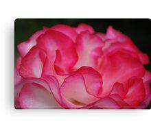 Rose Ribbons Canvas Print
