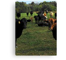 Don't try this at home..cow tipping..☺ Canvas Print