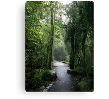 Rainforest Walk Canvas Print
