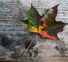 Autumn Leaf by Neonlight