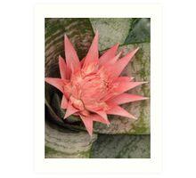 Flowering Bromeliad Art Print