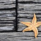 Starfish Love by for the love photography