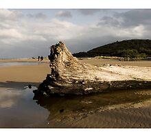 Kennett River - Great Ocean Road by Craig Holloway