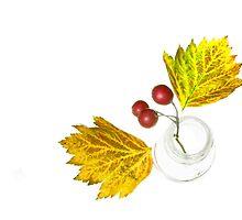 Hawthorne Berries (Crataegus) by JuliaPaa