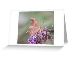 Blessings From The Butterfly Bush II Greeting Card