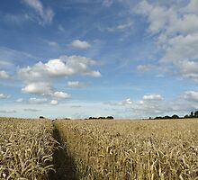 Wheat field by photontrappist