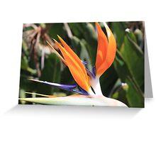"""Bird of Paradise"" Greeting Card"