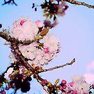 pink blush by cherishdmoments
