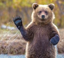 All i bear want to do is say Hi by KritaKil