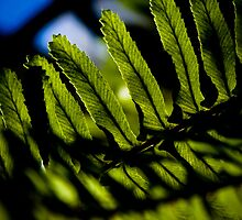Natures Blue and Green by Guy Hoffman (aka creative365)