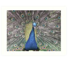Blue peacock fan dance Art Print
