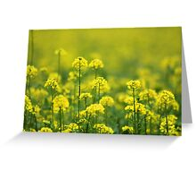 Yellow Smell Greeting Card