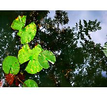 pond above pond below Photographic Print