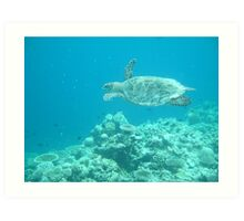Turtles of the Indian Ocean Art Print